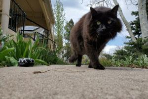 enzo-cat-eft-for-pets